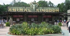 Disney Animal Kingdom Trivia