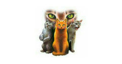 Warrior Cats Trivia