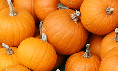 Which pumpkin are you quiz